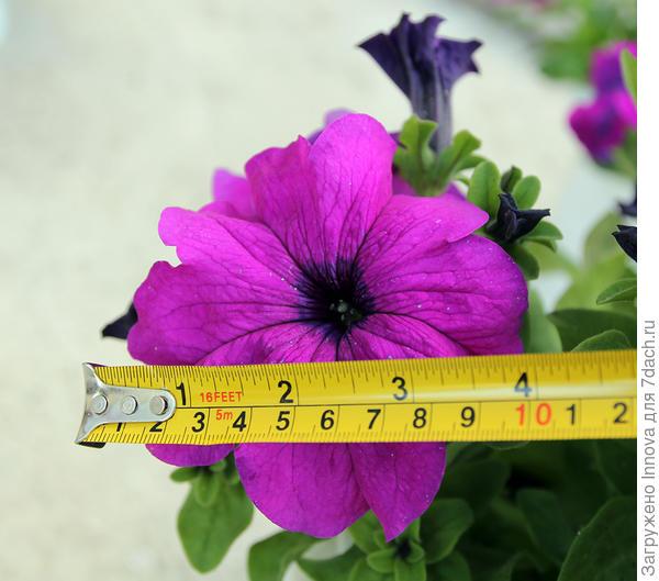Другой цветок для чистоты эксперимента