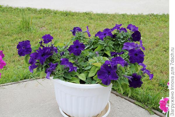 Три растения в одном вазоне