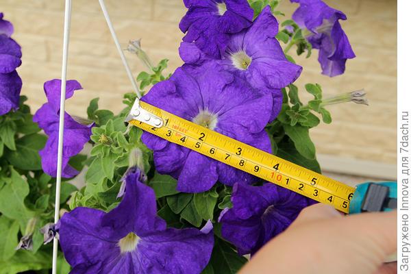 Размер цветка