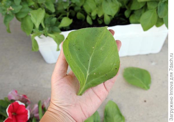 Обрезанный лист почти с ладонь