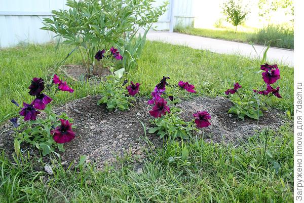 Цветение в июне в грунте. 11 июня