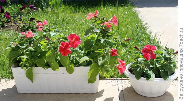 Цветение в июне. 16 июня