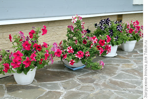 Расцветки в ассортименте