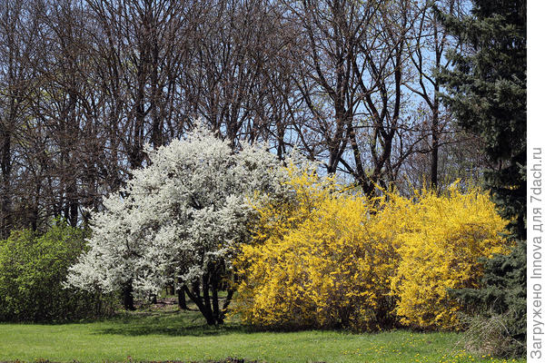 В парке много цветущих деревьев и кустарников