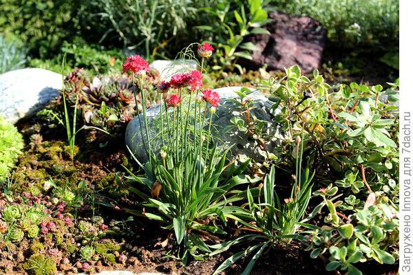 Два растения на клумбе в конце августа