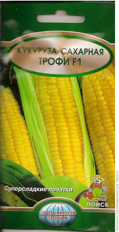 Пачка семян кукурузы