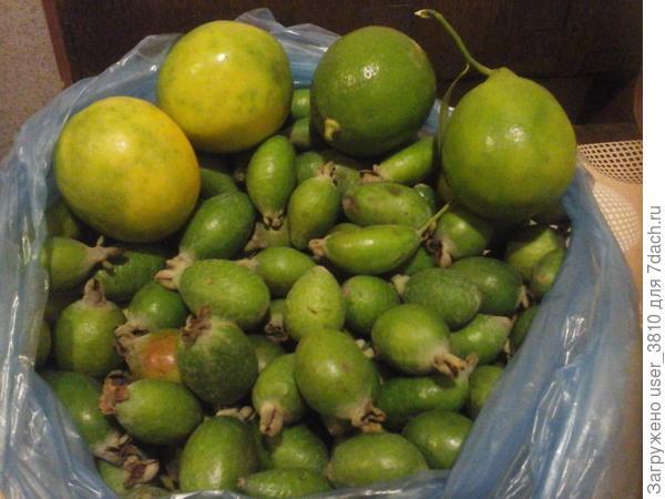 Фейхоа и лимоны