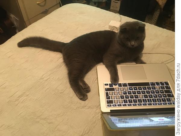 ...так, об чём сегодня пишем?...