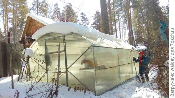 А бабушко моё ещё и снегом на теплице занялась