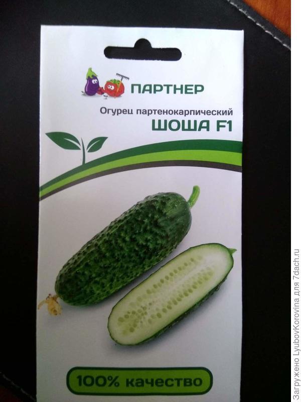 семена огурчика
