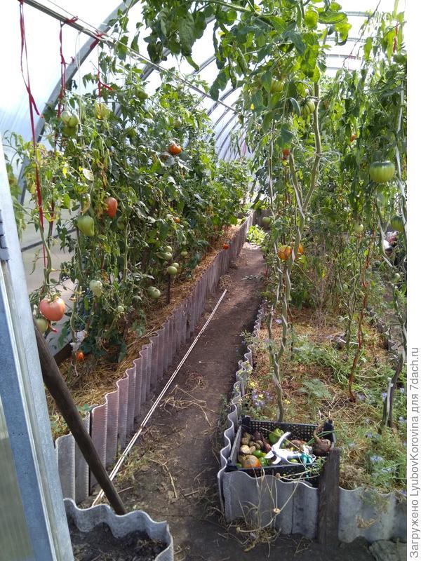 томаты фирмы Партнер