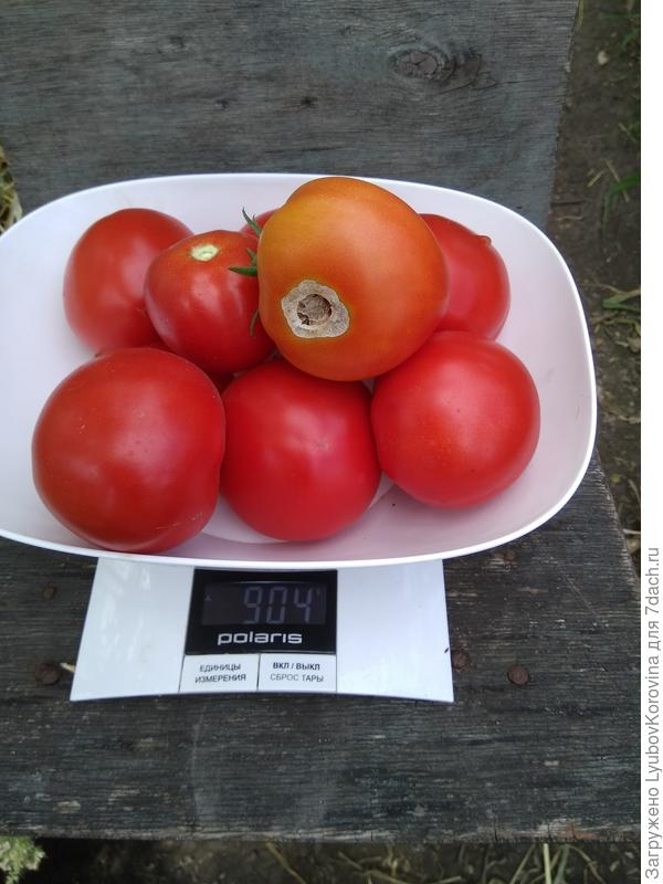 томат №2