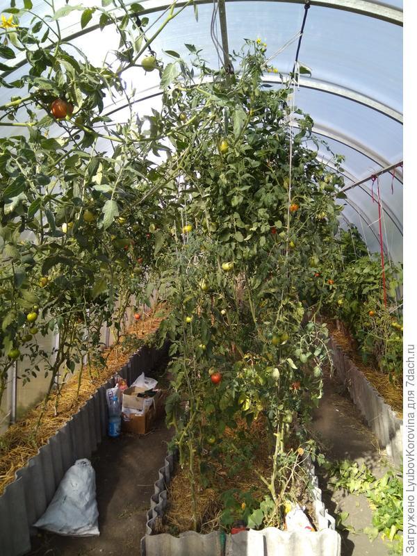 центр Минусинские томаты