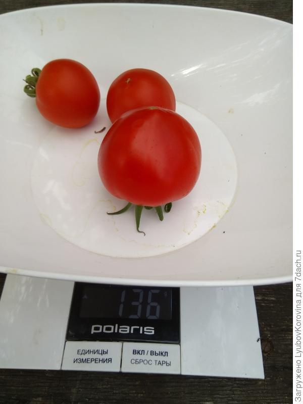 вес с томата Любаша 1