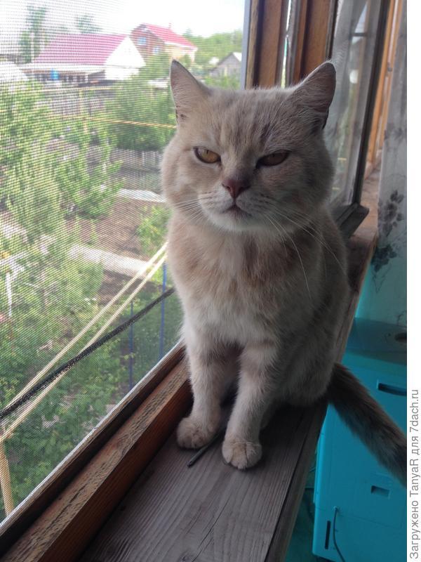 Хозяин балкона