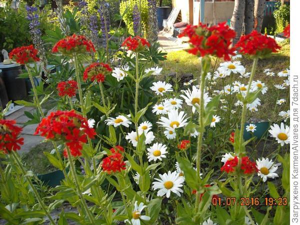 как называется красный цветок?