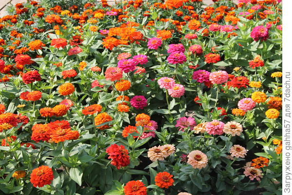Люблю большие массивы цветов по сортам