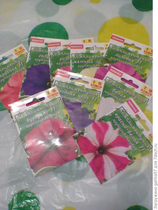 Комплиментунии   посадила девять  сортов, всхожесть семян 70%, все сорта комплиментуний  высажены в одну клумбу.