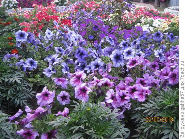 Парад цветения