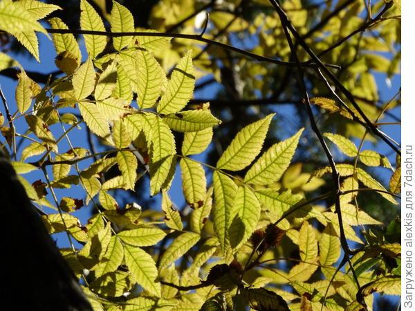 листья.