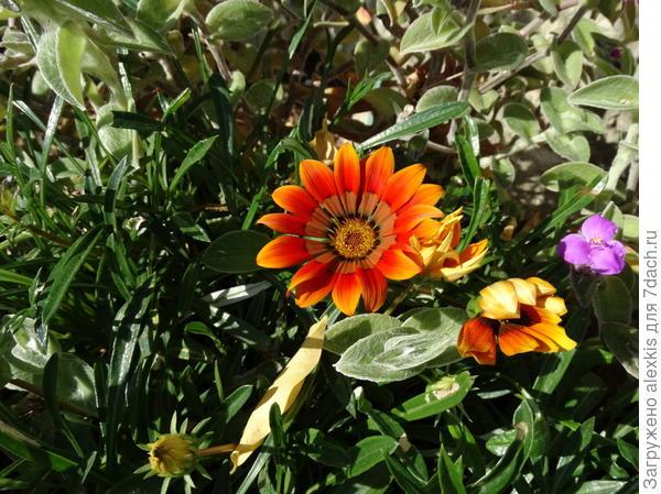 цветок .