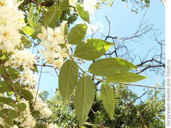листья с низу