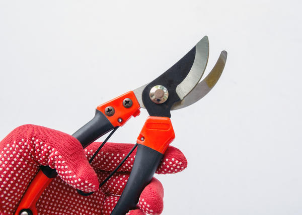 Для обрезки нужны специальные инструменты