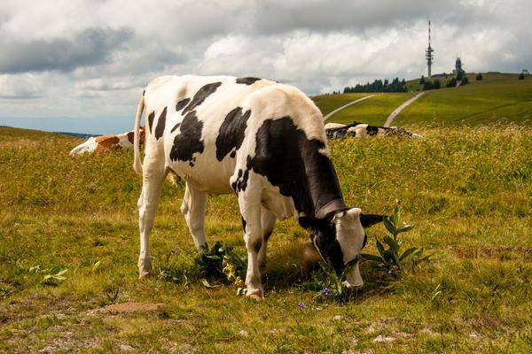 Бывают земли, предназначенные только для ведения сельского хозяйства