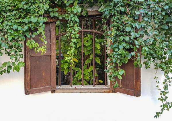 Густая зеленая листва всегда служила человеку естественной защитой от жаркого солнца