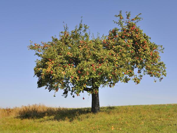 Как устроено дерево?