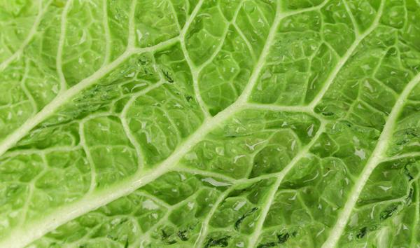Листья у пекинки нежные, как у салата