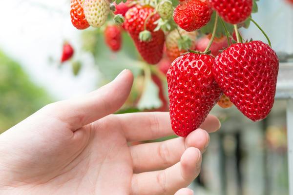 Чем темнее и насыщеннее цвет ягод клубники, тем больше в них витамина Р