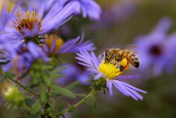 Где пчела собирала нектар — это тоже важно