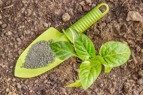 Дефицит фосфора отражается на развитии растений и урожае