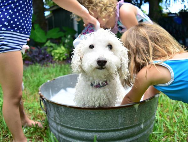 К водным процедурам можно подключить домашних животных
