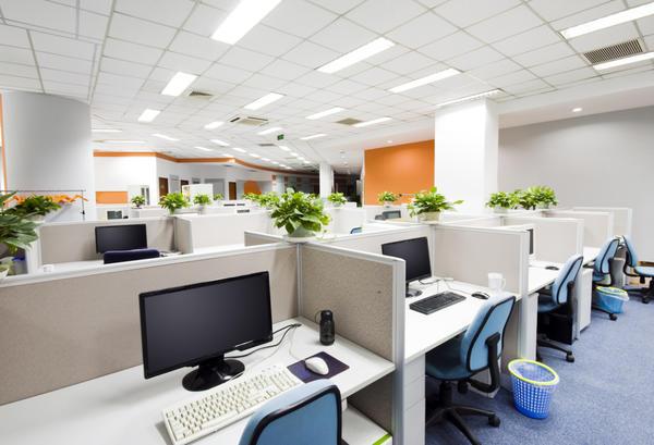 Растения на рабочем столе: защитят ли они от вредных излучений?