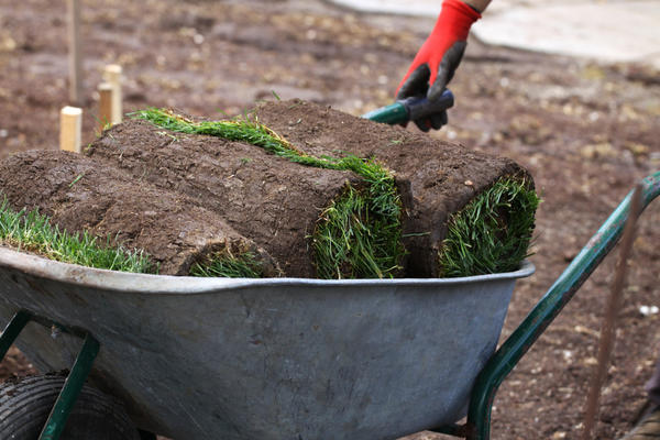 Рулонный газон - трава быстро и без проблем
