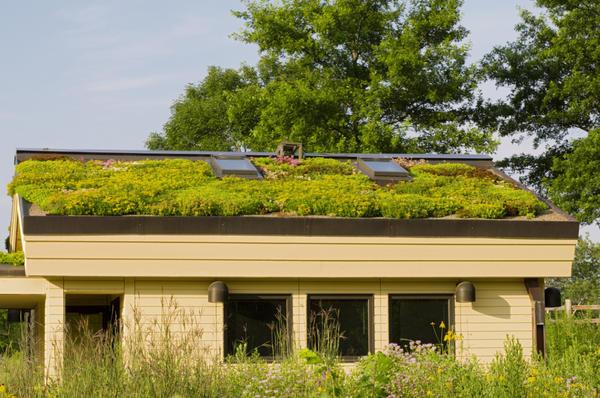 Сад на крыше в штате Миннесота