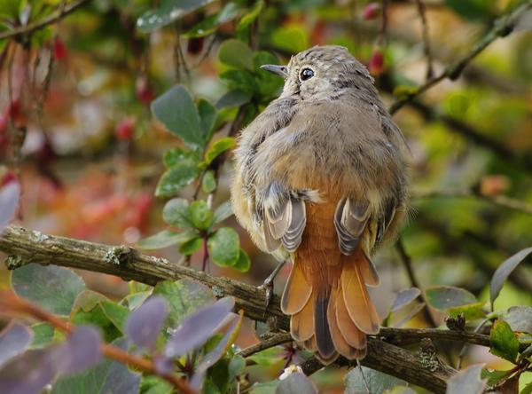 У птиц своя жизнь - со своими законами, удачами и бедами