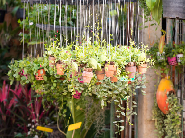 Подвесные горшки - способ добавить места и вертикальных акцентов в дизайн сада
