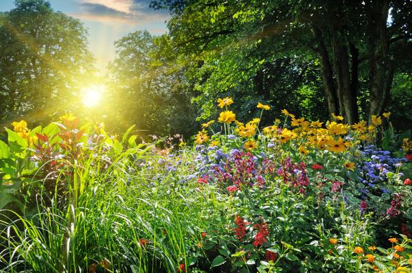 Некоторые садовые растения разрастаются слишком активно