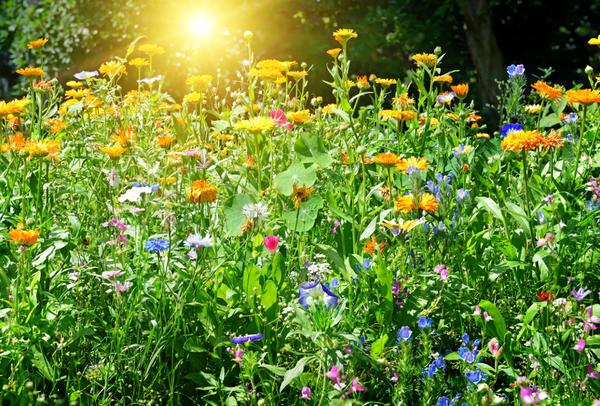 Уследить за каждым цветочком - нереальная затея