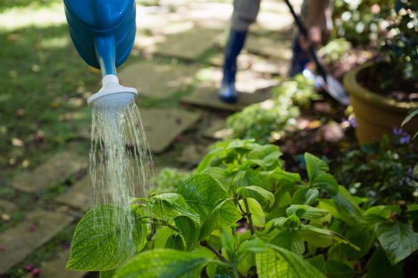 Железный купорос: применение в саду