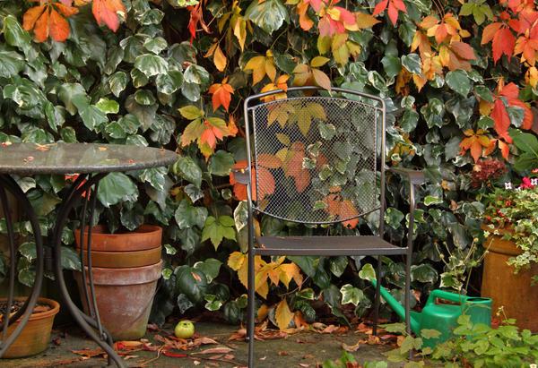 Вертикальное озеленение плетущимися растениями - отличный способ украсить участок