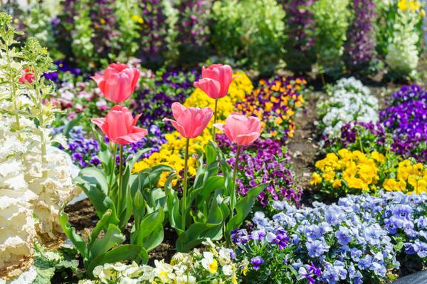 Если вы хотите высадить тюльпаны в цветник с многолетниками, лучше отвести им роль второго плана