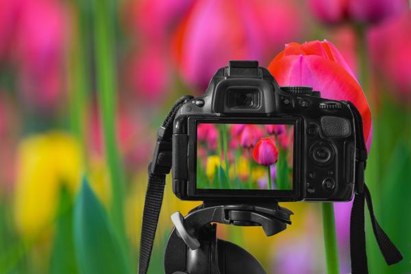 Для более сложных съемок с размытием заднего плана лучше использовать системные или зеркальные камеры