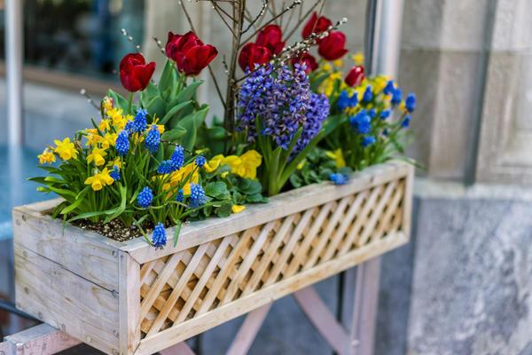 Луковичные в контейнерах позволят создать яркую весеннюю композицию не только в цветниках