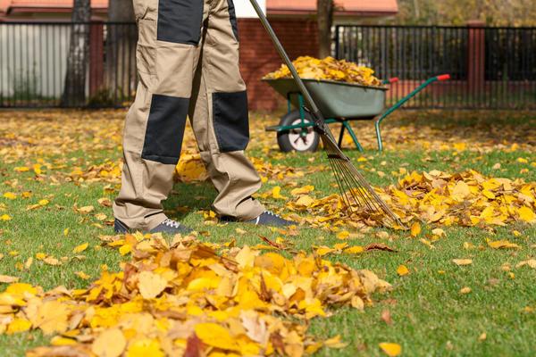 Листья следует собрать и сжечь