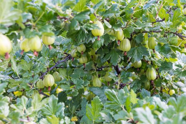 Правильная осенняя обрезка - залог хорошего урожая