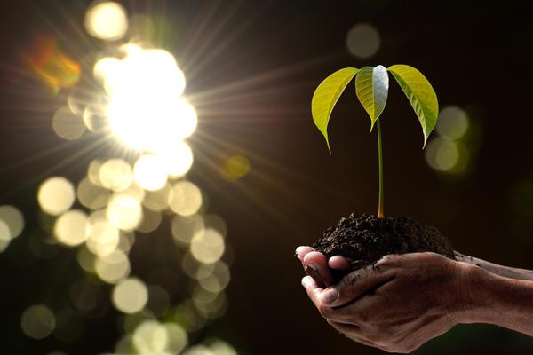 Садоводам по силам защитить нашу планету
